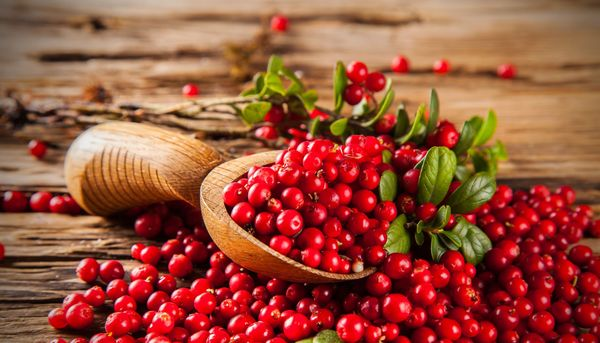 Cranberry-Präparate bei wiederkehrenden Harnwegsinfekten